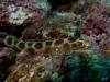serpentin-Léopard__DSC0126