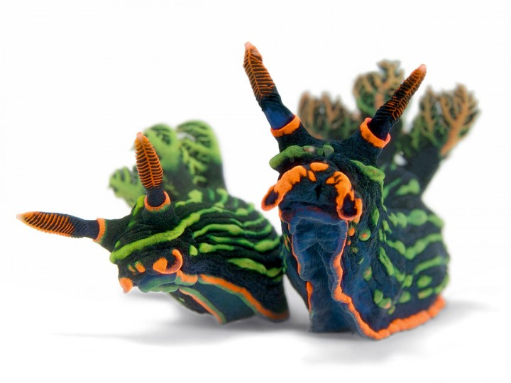 nudibranches-01-720x540
